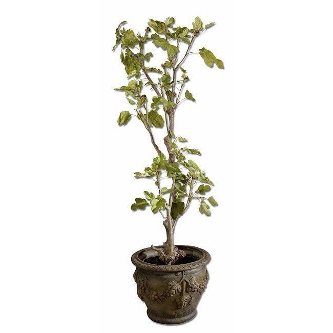 Jordan Valley Fig Tree