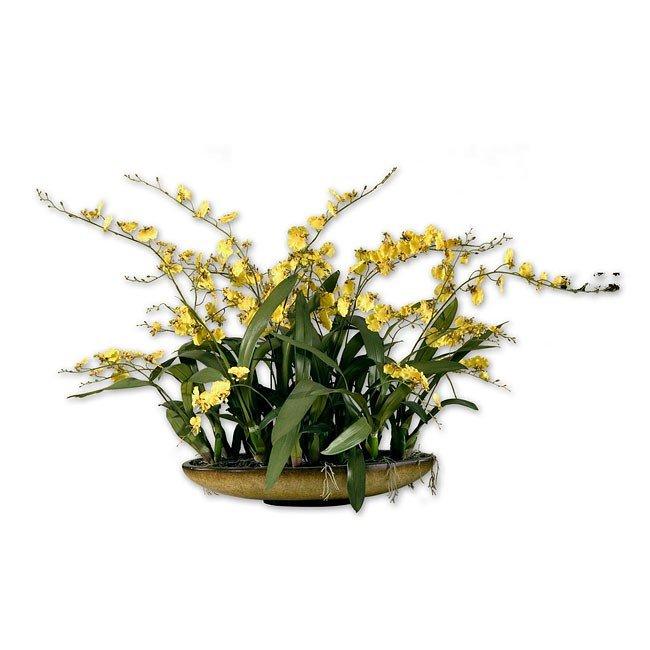 Shangri-La Orchids